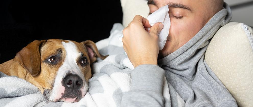 Coronavirus Update: Emerging Strains and Veterinary Patients