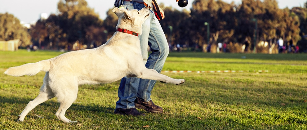 MYOS RENS Announces Publication of Clinical Study on Recovery in Dogs Following TPLO Surgery