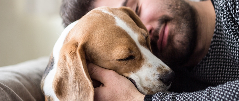 Study Shows Shifting Views on Pet Healthcare, Human-Animal Bond During Pandemic