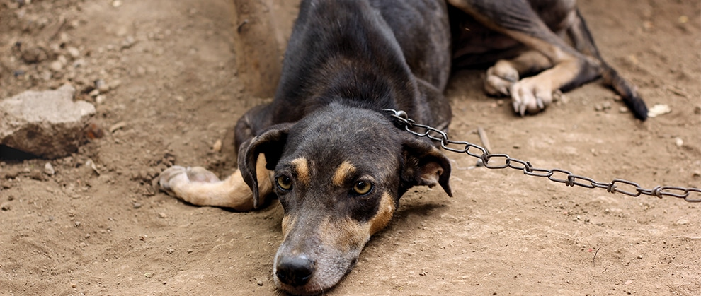 Identifying Signs of Animal Abuse