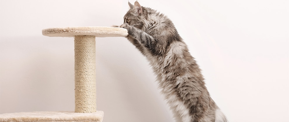 Managing the Pain of Feline Degenerative Joint Disease