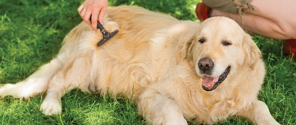 Addressing the Growing Problem of Overweight Pets
