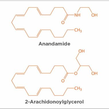 Figure 2. Molecular structure of anandamide and 2-arachidonoylglycerol (2-AG). Illustration: chromatos/shutterstock.com/shutterstock.com