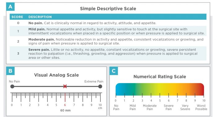 Figure 1. General examples of unidimensional acute pain assessment scales used in cats. (A) Simple descriptive scale, (B) visual analog scale, (C) numerical rating scale.