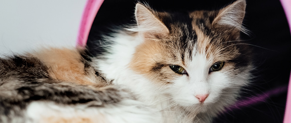 Managing Feline Urethral Obstruction