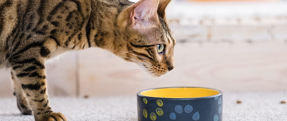 Nutrition for Small Animal Cancer Patients