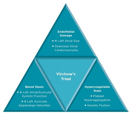 Figure 1. Factors that contribute to Virchow's triad of thrombosis.