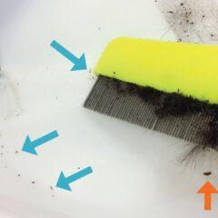 "Figure 5. Flea comb, demonstrating large amounts of ""flea dirt,"" a flea (orange arrow), and several lice (blue arrows)."