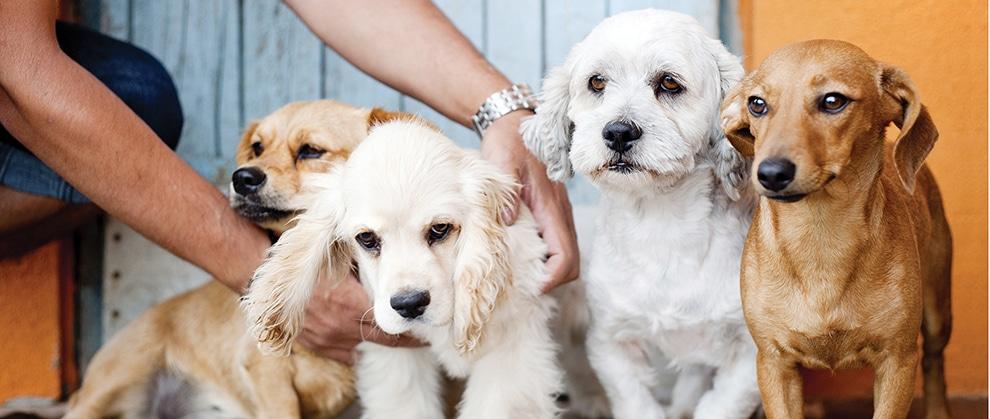 Canine Parainfluenza Virus Vaccination