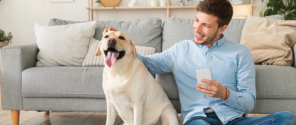Data-driven Pet Solutions: Addressing the Pet Obesity Epidemic