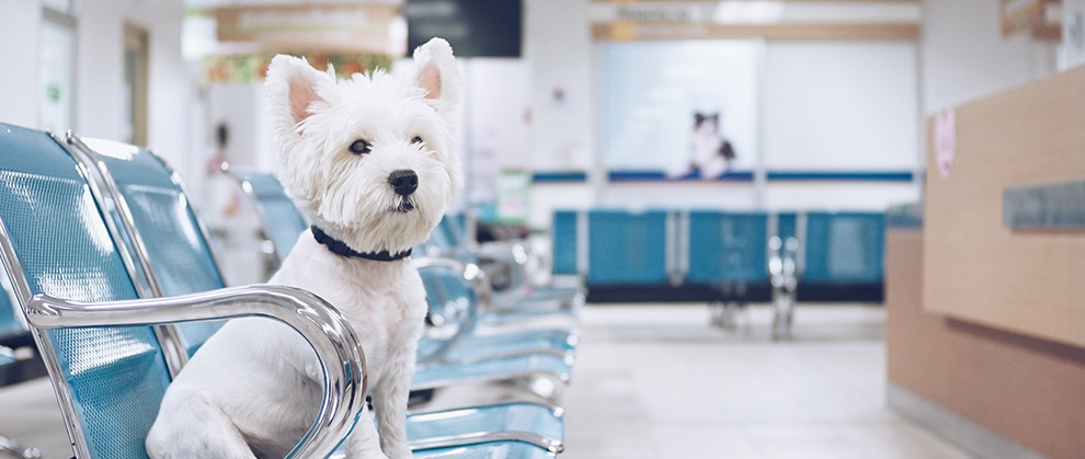 Data-Driven Pet Solutions: The Importance of Preventive Care