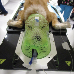 Figure 1. (E) Patient immobilized for stereotactic radiation therapy of a nasal tumor. The maxilla is affixed to a bite plate and the head is secured to the table with a custom thermoplastic mask.
