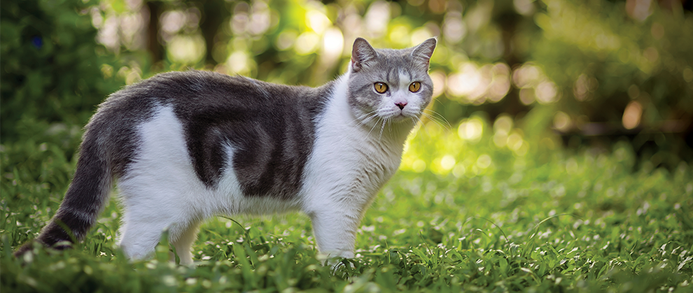 Aelurostrongylosis in Cats